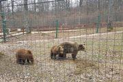 Bear Sanctuary in Romania by Holiday to Romania